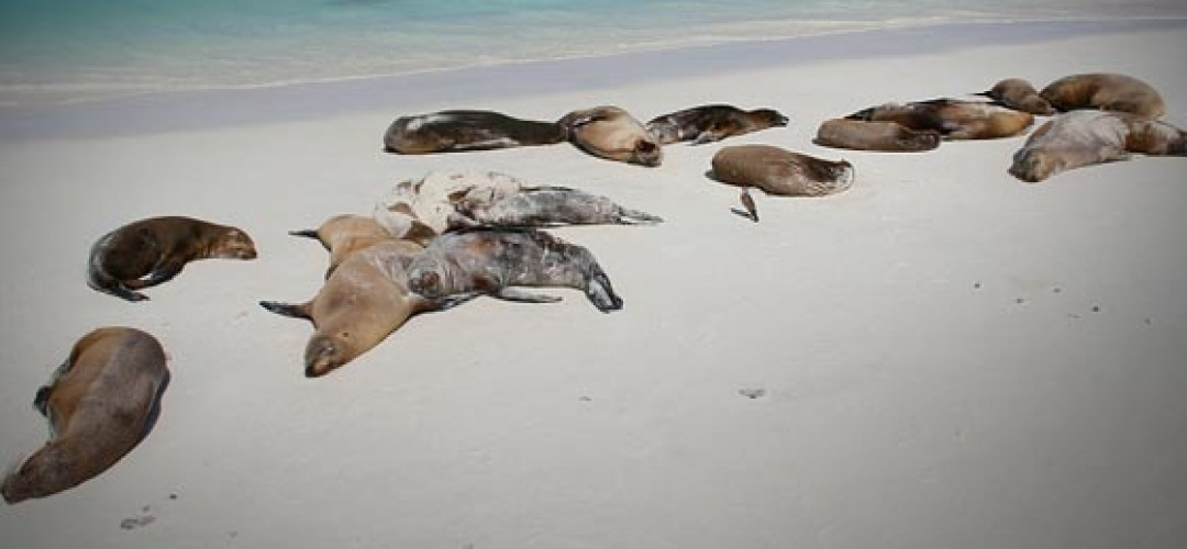 dead-sea-lions-california.jpeg